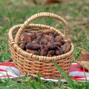 Cacao en pepa